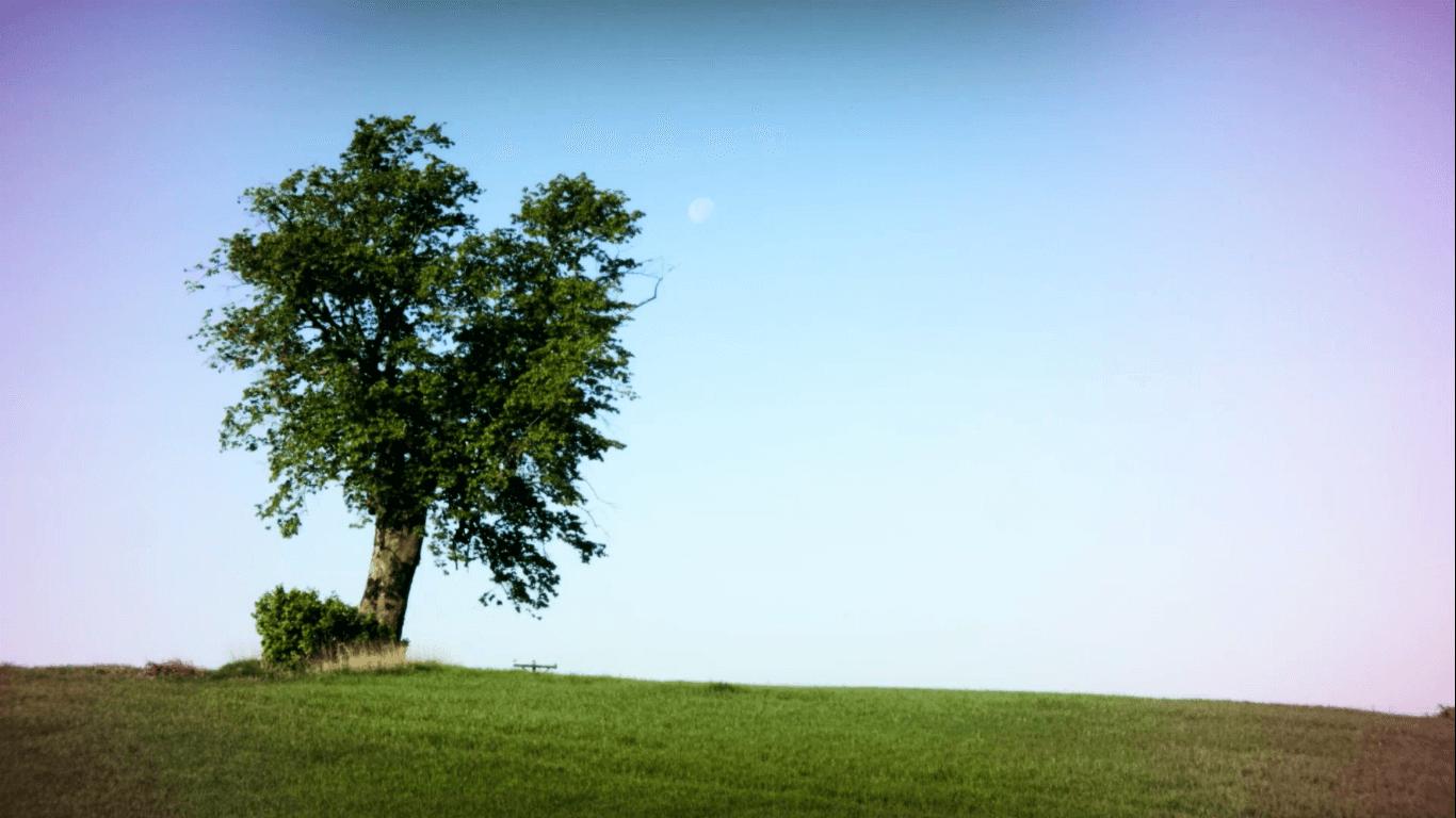 Лечебните свойства на лешниковото дърво